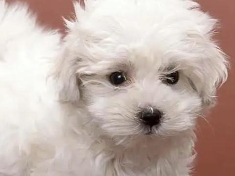 属狗今年运程每月运势如何哪个月能发财?