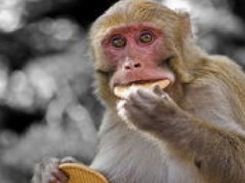 68年属猴的守护神是什么佩戴什么合适?