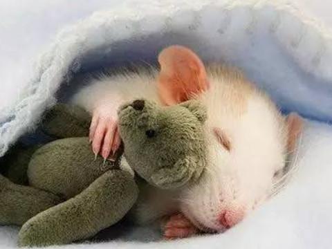 属鼠人一生的运势怎么样顺吗?