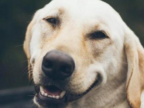 39岁生肖狗有一劫怎么化解呢?