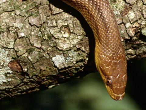 为什么说属蛇的人很聪明有头脑?