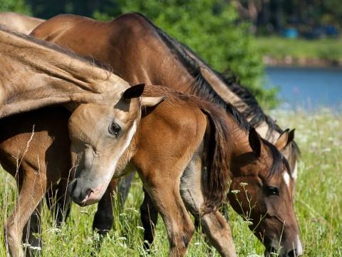 属马的一生命运如何能富贵吗?