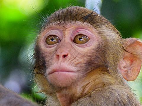 属猴的人性格怎么样运气好不好?