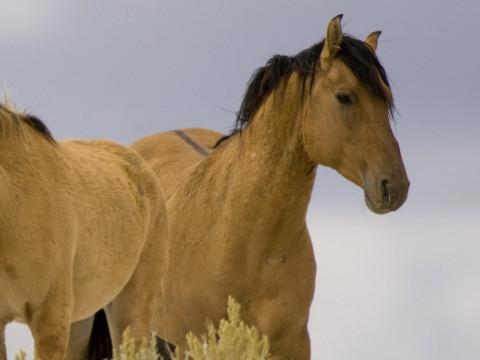 属马的大忌属相是什么能转运吗?