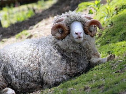 67年一生有几次婚姻属羊婚姻幸福吗?