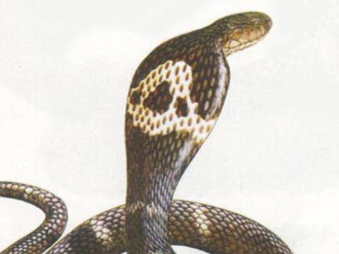属蛇男遇到真爱的时候是什么反应?