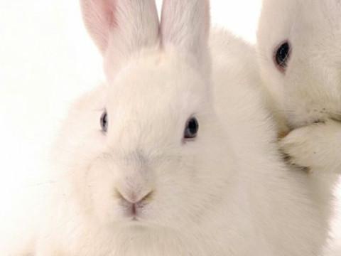 1987年的属兔人是什么命运运势旺吗?