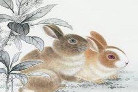 1963年属兔人2021年运势男性 63年58岁属兔男2021年每月运程怎么样