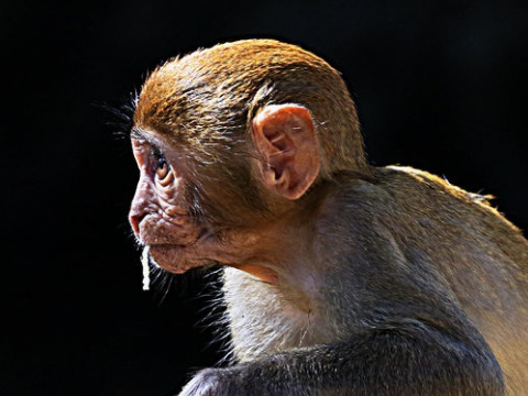 1980年属猴人2022年运势及运程,80年出生的42岁属猴2022年每月运程详解