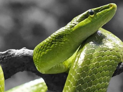 男属蛇女属龙的姻缘婚姻配对相合吗?