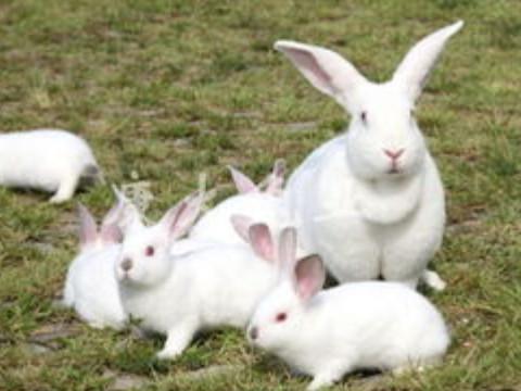 1975年属兔的吉祥物佩戴什么合适?