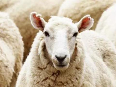 女属羊是几月份克夫怎么化解?