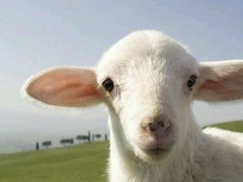 1991年属羊人2022年运势及运程,91年出生的31岁属羊2022年每月运程详解
