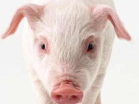 1983属猪的年份表及年龄运气怎么样?