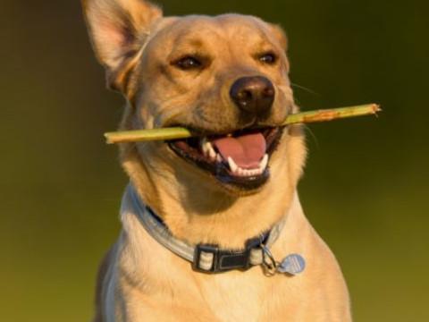 1982年属狗人2022年运势及运程,82年出生的40岁属狗2022年每月运程详解