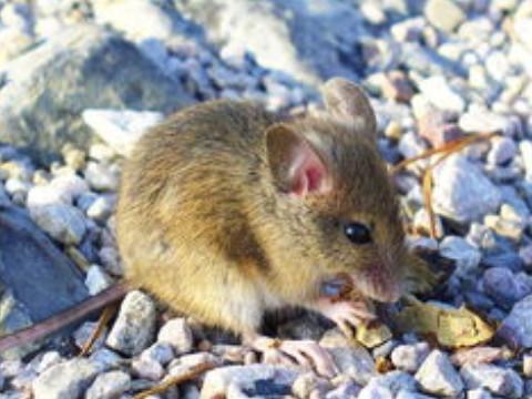 1984年属鼠人2022年运势及运程,84年出生的38岁属鼠2022年每月运程详解