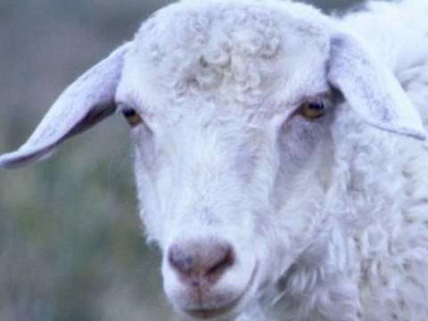 1991年属羊女一生命运如何能享福吗?