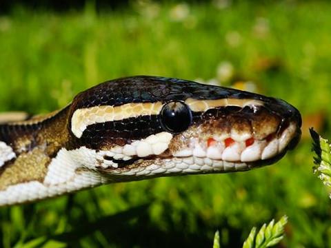 属蛇女人的性格和脾气怎么样运气旺吗?