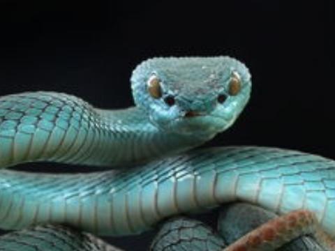 1965年属蛇人2022年运势及运程,65年出生的57岁属蛇2022年每月运程详解