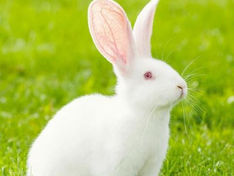 1999属兔佩戴的吉祥物有什么能旺运?