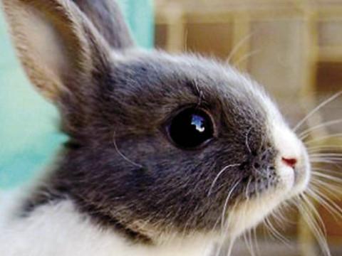 属兔的女人性格和脾气好不好财运好吗?