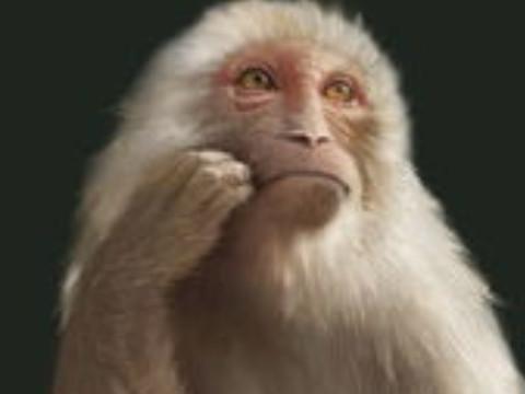 属猴的男人性格和爱情运势如何?