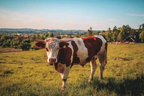 生肖牛2021本命年可以扫墓吗扫墓要注意什么