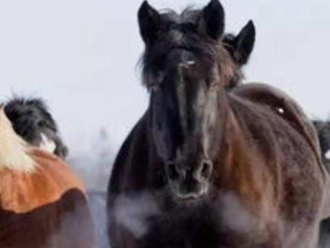 66年属马的命运好吗有福气吗?