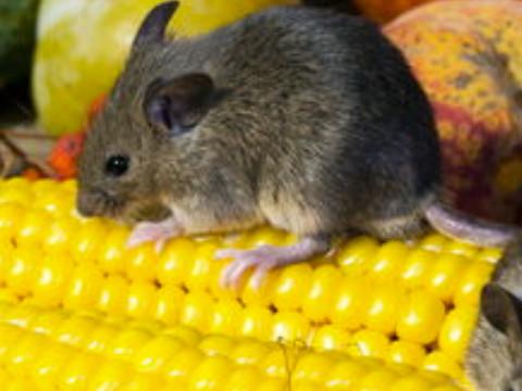 属鼠的和什么属相最配能婚姻幸福?
