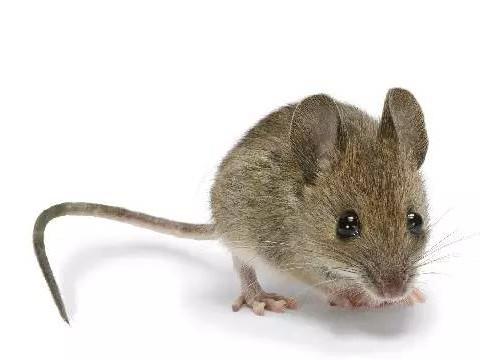 1972年属鼠人一生命运如何财运旺吗?