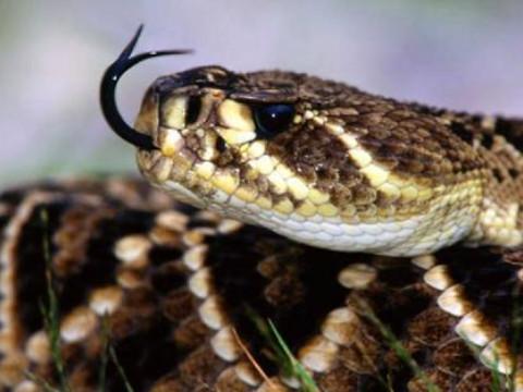 为什么说属蛇的今年不好运气差?