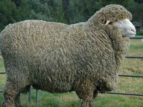 1979年属羊人2022年运势及运程,79年出生的43岁属羊2022年每月运程详解