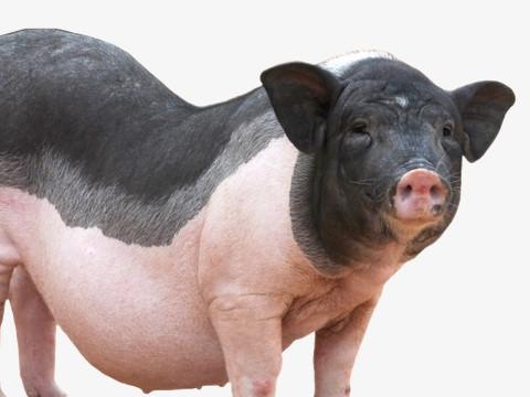1983年属猪人2022年运势及运程,83年出生的39岁属猪2022年每月运程详解