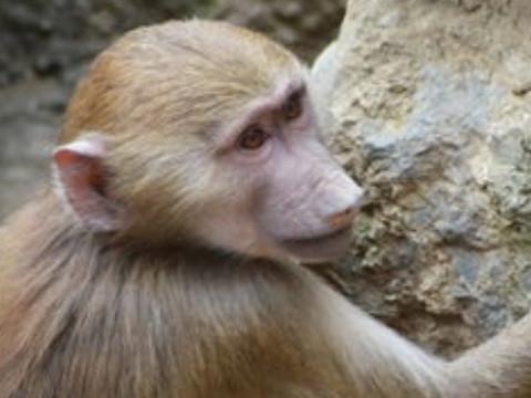 1992年属猴的女人性格和脾气如何运气怎么样?