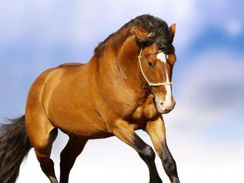 属马的和什么属相相冲相克?