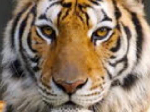 1998属虎的姻缘方位在哪里运势好不好?