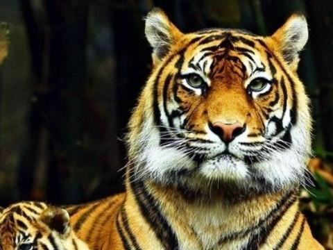 1974年属虎人2022年运势及运程,74年出生的48岁属虎2022本命年每月运程详解