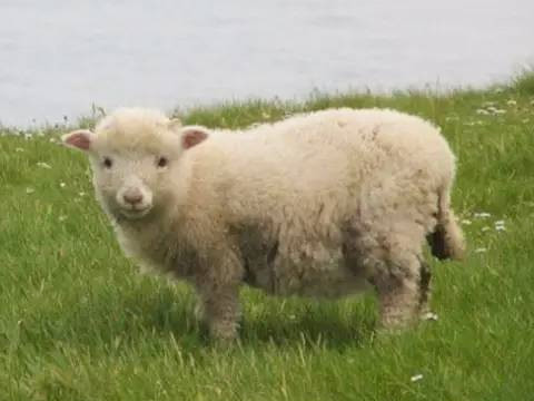 1979年属羊人晚年命运如何有福气吗?