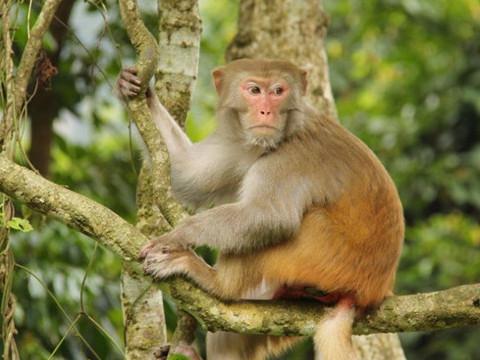 属猴男最珍惜哪种女人属相配对