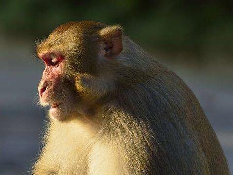 2004年属猴的性格和脾气女人怎么样?