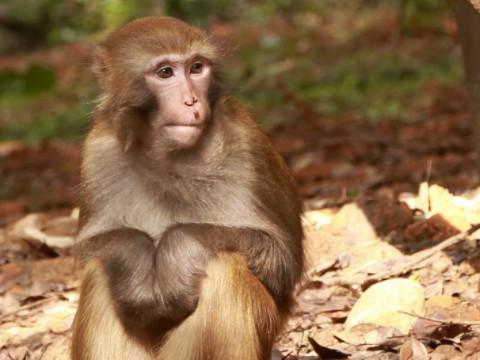 1968年属猴人2022年运势及运程,68年出生的54岁属猴2022年每月运程详解