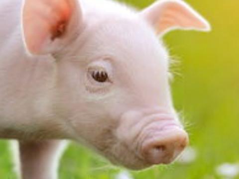 两个95属猪的结婚好吗会幸福吗?