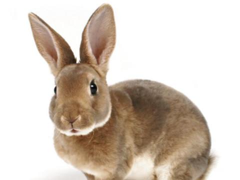 1999年属兔女2022年运势及运程,23岁属兔人2022全年每月运势女性如何