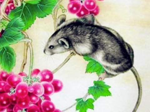 属虎的和属鼠的婚姻相配吗会幸福吗?