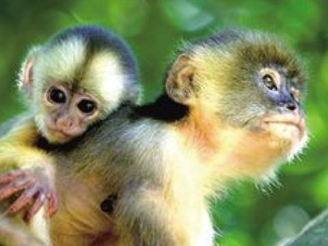 68年属猴人每月运气详解2021年运气怎么样?
