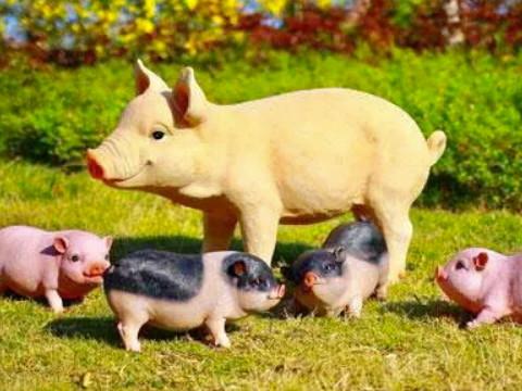 属猪和属猴的合不合属相相克吗?