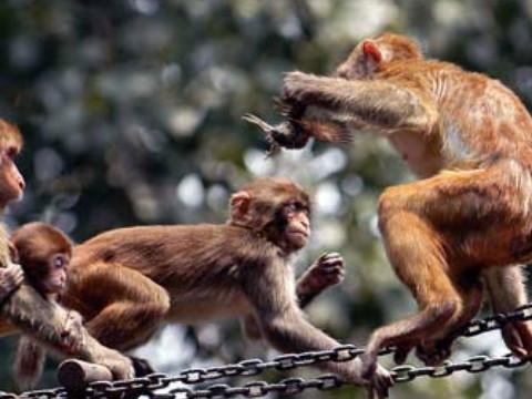68年猴人一生的大劫怎么化解?
