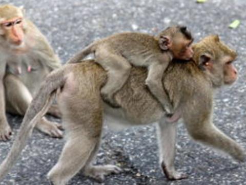 属猴2022年犯太岁吗,2022年属猴冲太岁如何化解运势