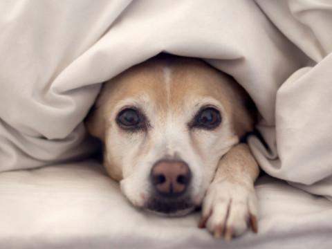 属狗的守护神是什么命好吗?