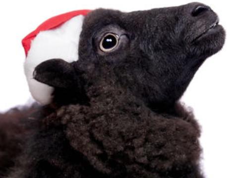 属羊的年龄表2021多大能走大运吗?